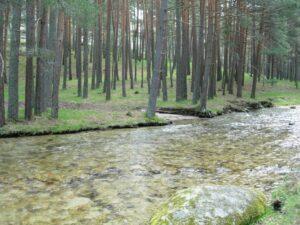 Montes de Valsain
