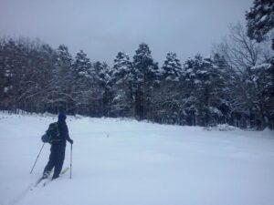 pinar Valsaín nevado