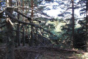 Paseos por el Pinar de Valsaín