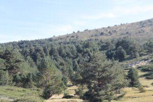 Paseos Parque Nacional Sierra del Guadarrama